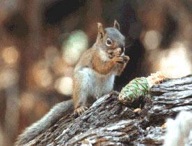 Squir1l